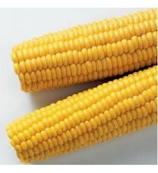 Kukuřice KLAS mražená 1kg (4x2,5kg karton) ARDO
